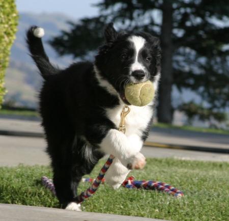 pup,ball crop